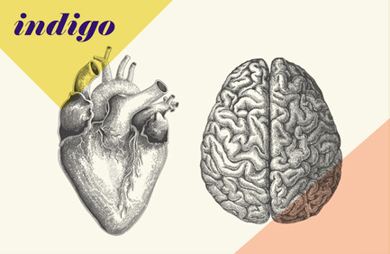 Indigo logo and illustrations – black and white anatomical line drawings of a heart and a brain